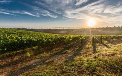 Il Comune di Feltre assegna 12 ettari di terre pubbliche