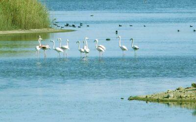Valorizzazione delle saline: il Comune di Priolo le affida all'ente gestore della Riserva naturale