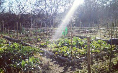 A Vicenza un nuovo bando per gli orti urbani