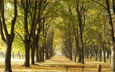 Arbolia: lotta ai cambiamenti climatici con la creazione di boschi urbani