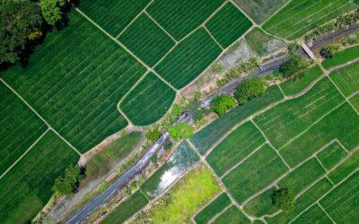 Busto Arsizio: avviso per la locazione di terreni comunali