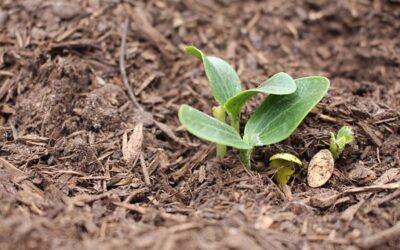 Approvata al G20 Agricoltura, la Carta della sostenibilità dei sistemi alimentari