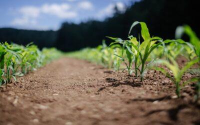 """In Calabria l'agroecologia e l'agricoltura resiliente della cooperativa """"Della Terra contadinanza necessaria"""""""