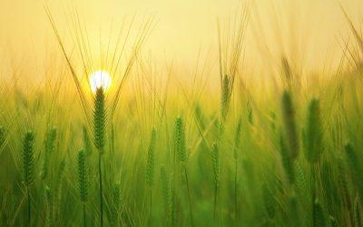 Riforma Politica Agricola Comune: primo ok dal Parlamento Europeo