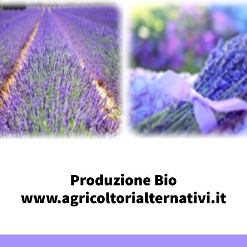 Agricoltori Alternativi  Società agricola