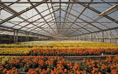 Settore florovivaistico: contributo strategico agli obiettivi del Green Deal