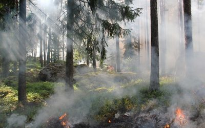 Approvato il decreto-legge per il contrasto degli incendi boschivi