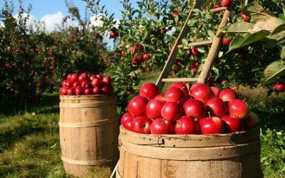 """""""Ismea Investe"""": il nuovo strumento finanziario per progetti della filiera agroalimentare"""
