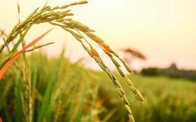 CIA-Agricoltori Italiani: accordo per aumentare sementi biologiche in Italia